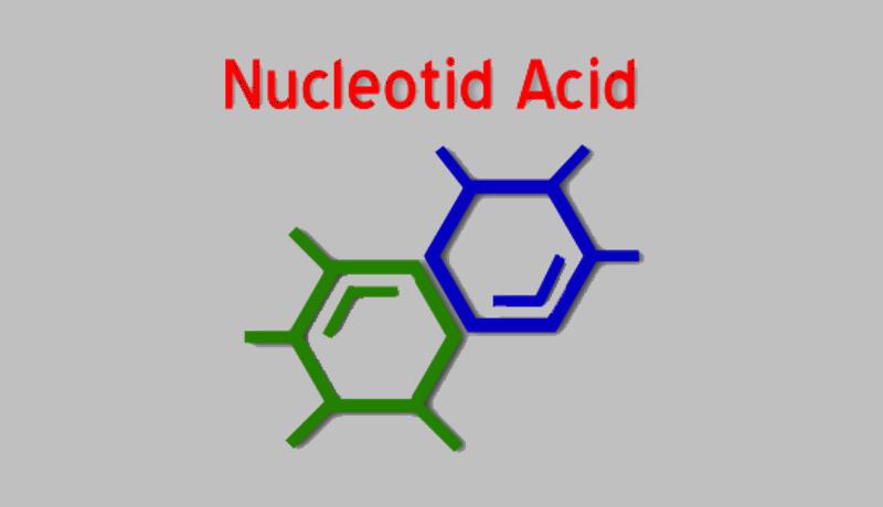 بیوشیمی 1 اسید نوکلئیک