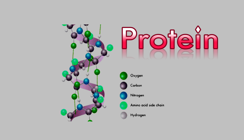 بیو شیمی پروتئین